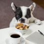 Como cambiar de manera adecuada el alimento de tu perro